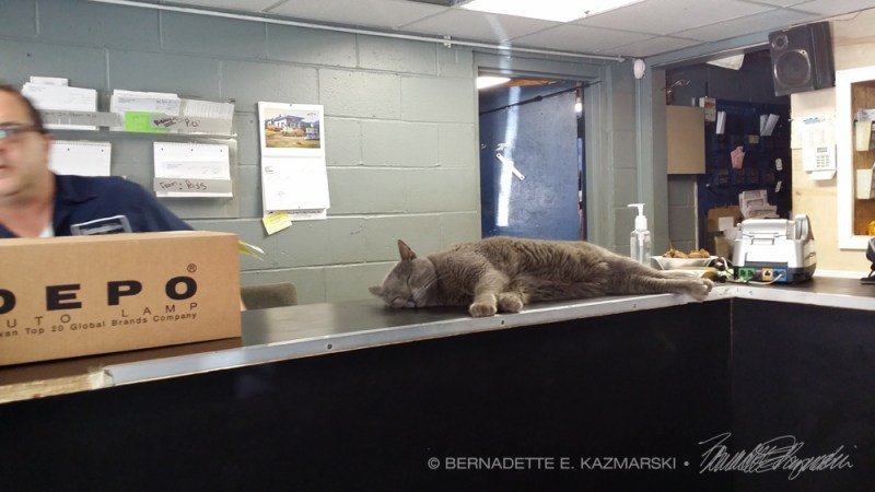 gray cat on counter