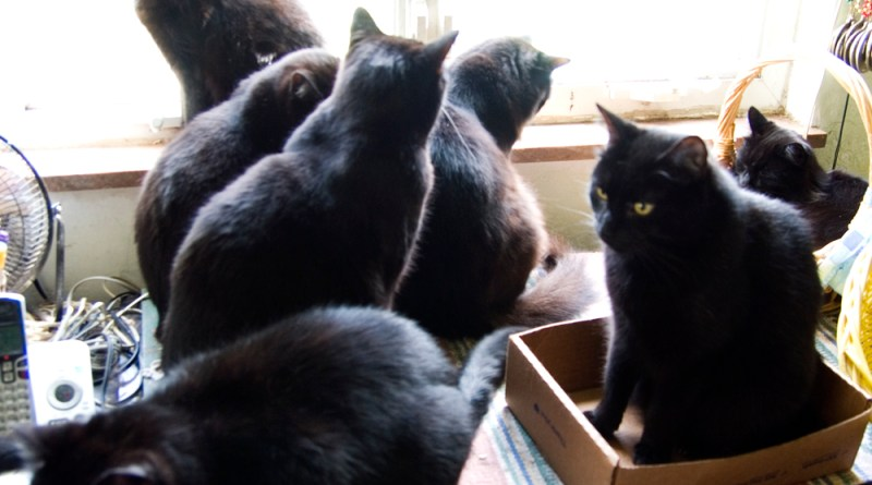 seven black cats at window