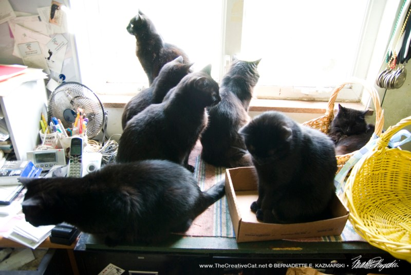 Seven black cats are patiently waiting for their pay per view program!