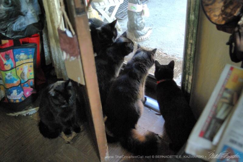 Five at the front door! Sort of.