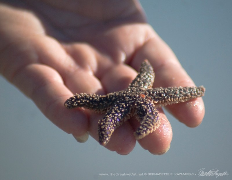 It makes a big difference to this starfish.
