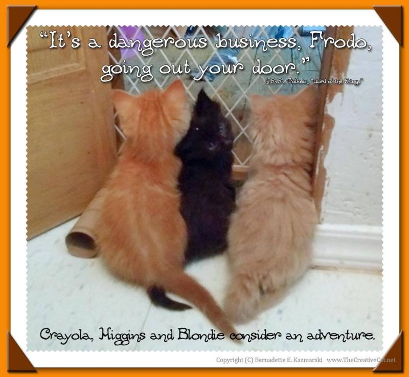 """""""It's a dangerous business, Frodo, going out your door."""" The three fuzzy brothers, Crayola, Higgins and Blondie, consider an adventure."""