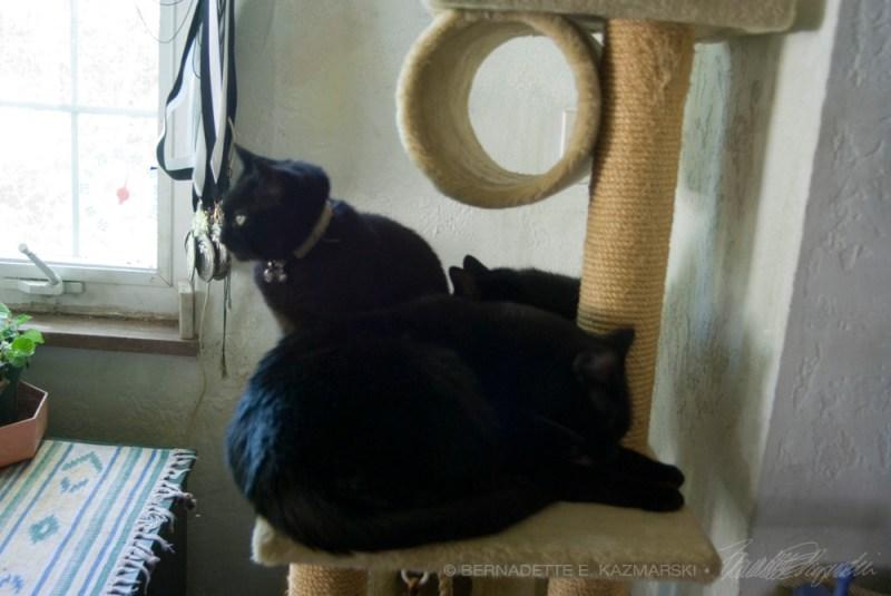 three black cats on cat tree