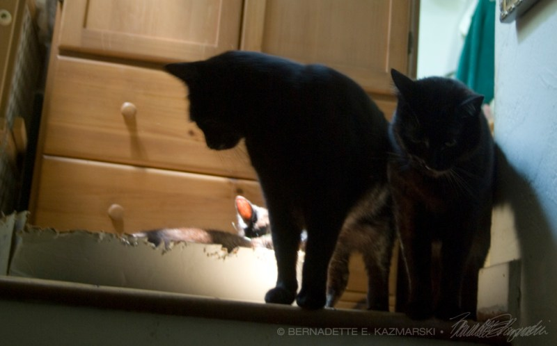 two black cats in box.