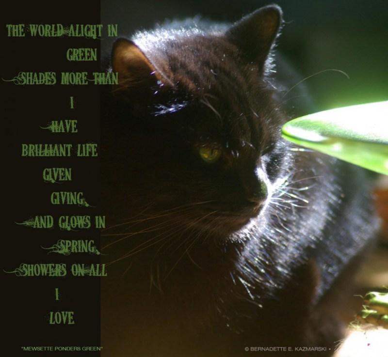 """Mewsette Ponders Green"", poem and photo © Bernadette E. Kazmarski"