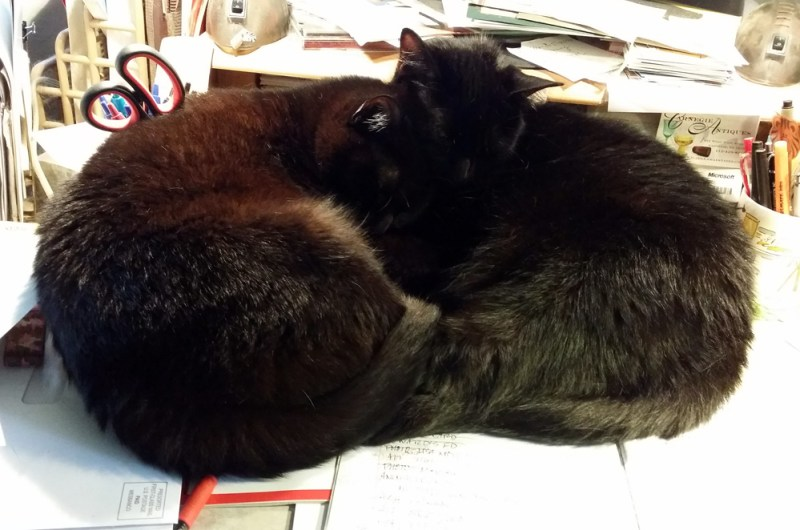 two black cats curled together