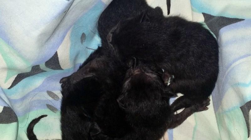 four newborn kittens
