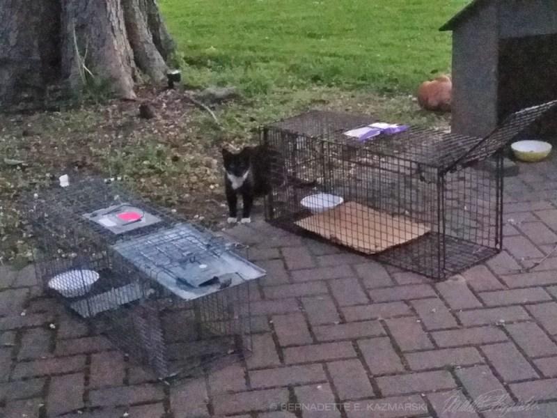 black and white kitty
