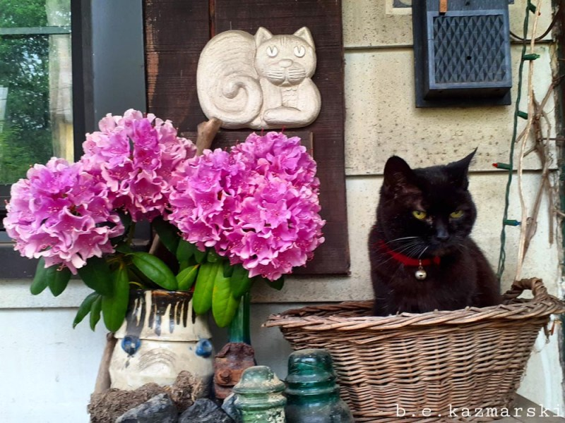 black cat in basket with flowrs