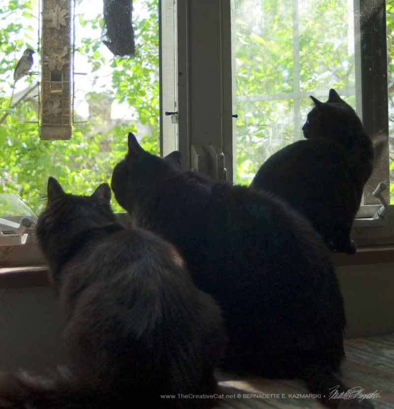 Basil, Mewsette and Bella are locked in.