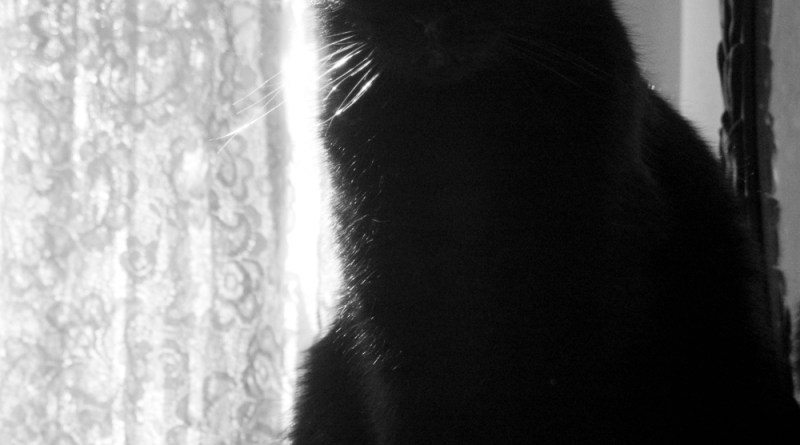 black cat in silhouette against lace curtain