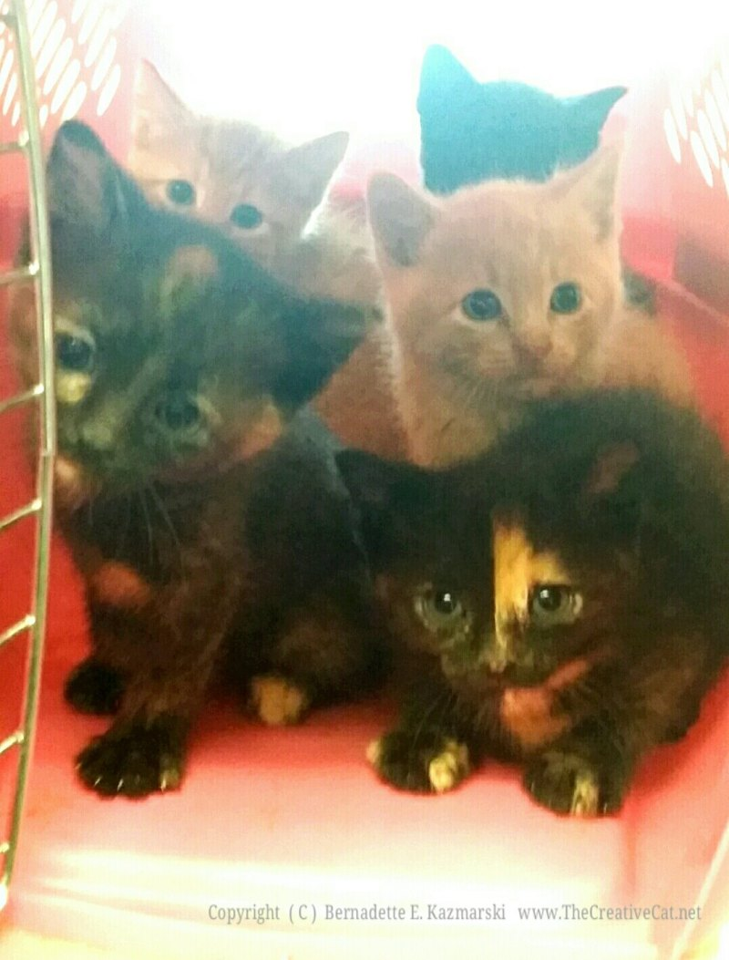 Five kittens from one place.