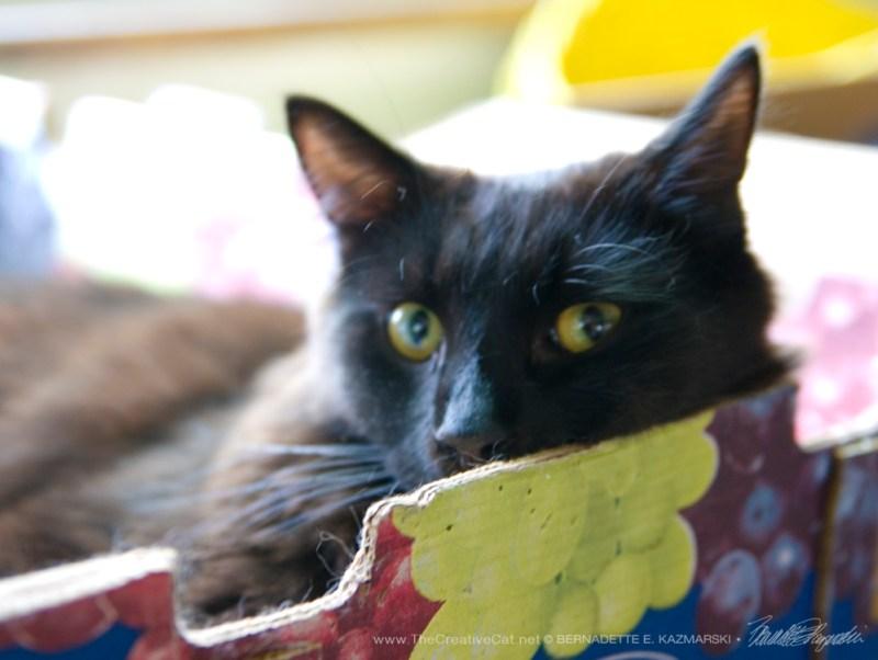 Hamlet in the grapes box.