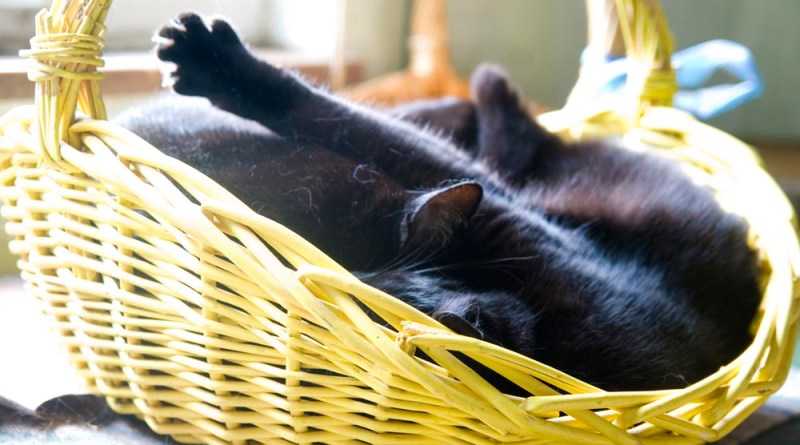Bella and Jelly Bean snuggling in the basket.