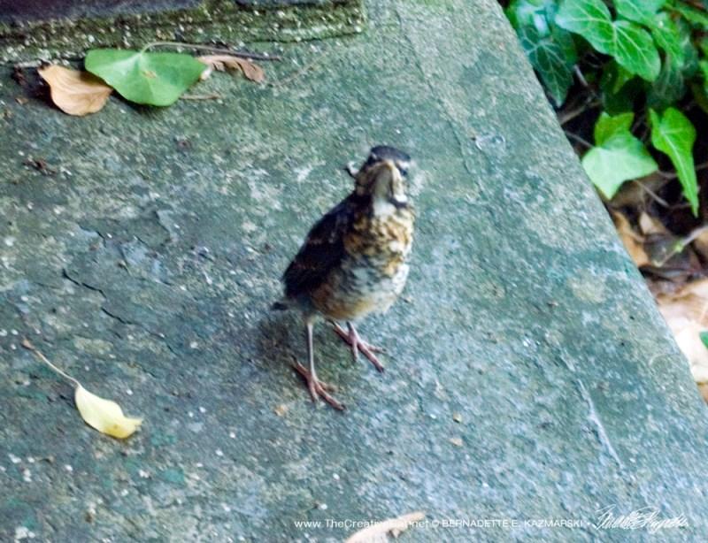 Grumpybird.