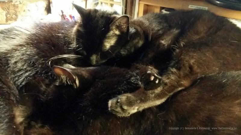060515-CatsDesk4