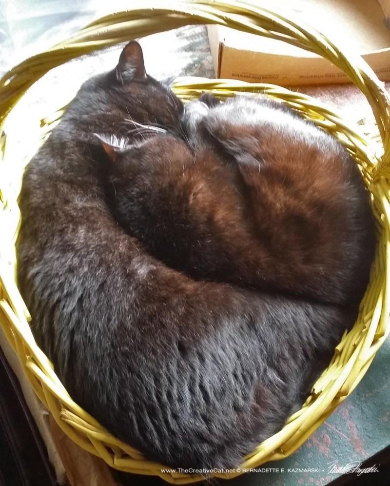Basket Nap, Scene 1
