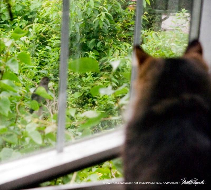 Mariposa and the catbird.