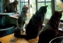 Four cats watching the bird drama.