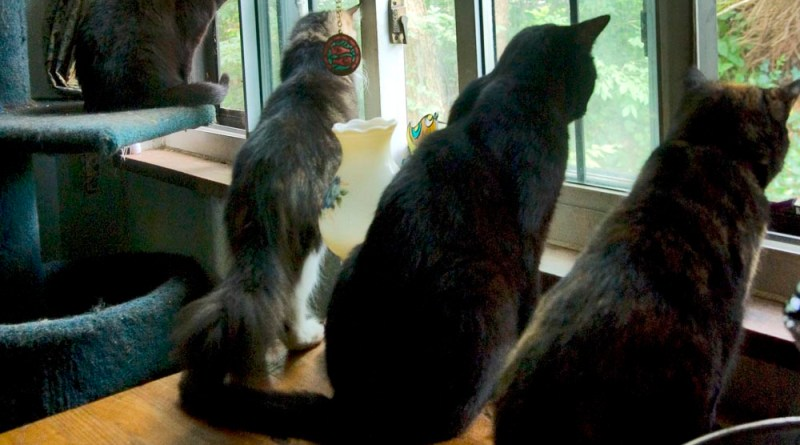 Four cats watching the bird drama.