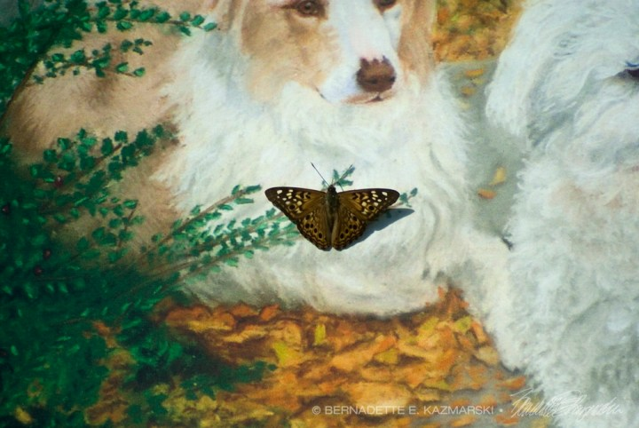 portrait of dogs with butterfly investigating