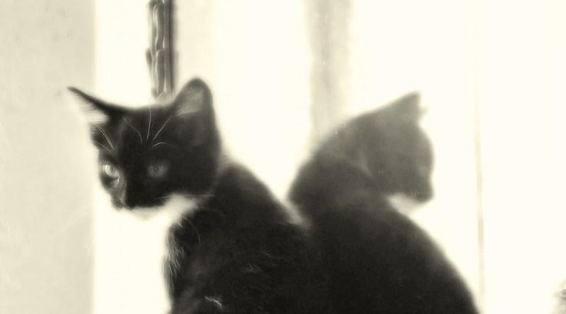 Zorro reflecting.