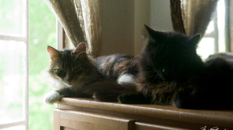 Mariposa and Hamlet enjoy a cool window on a warm afternoon.