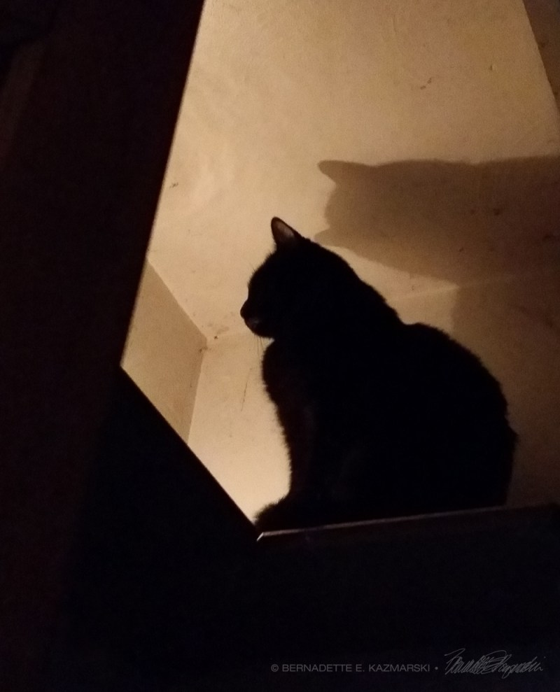 cat on shelf in silhouette