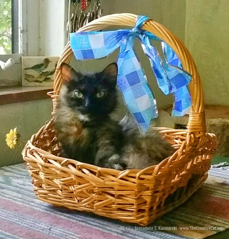 Charm being charming in the basket.
