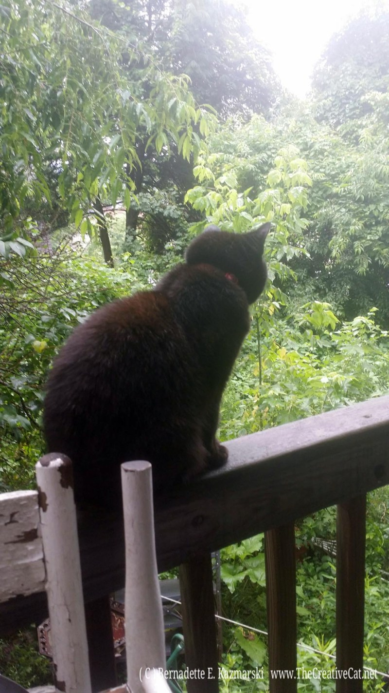 Mimi looking out on the misty morning.