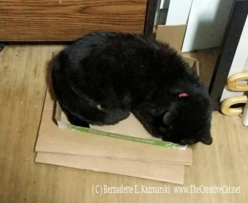 061816-MimiBean-box4