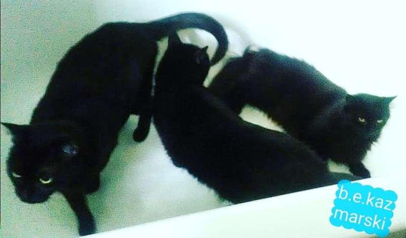 three black cats in tub
