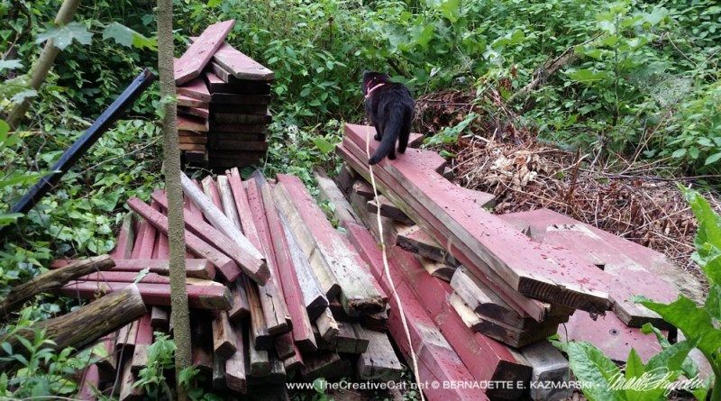 Checking out the taller pile of wood.