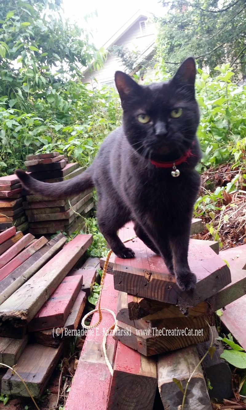 Mimi on the woodpile in the rain.