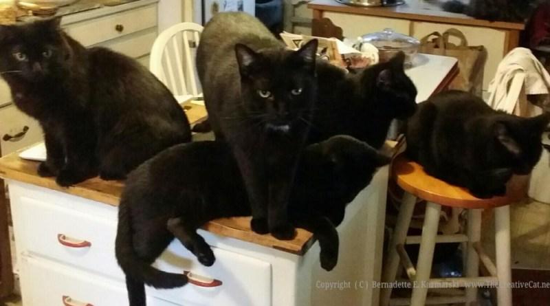 Basil, Bean, Bella, Sunshine and Giuseppe are waiting...