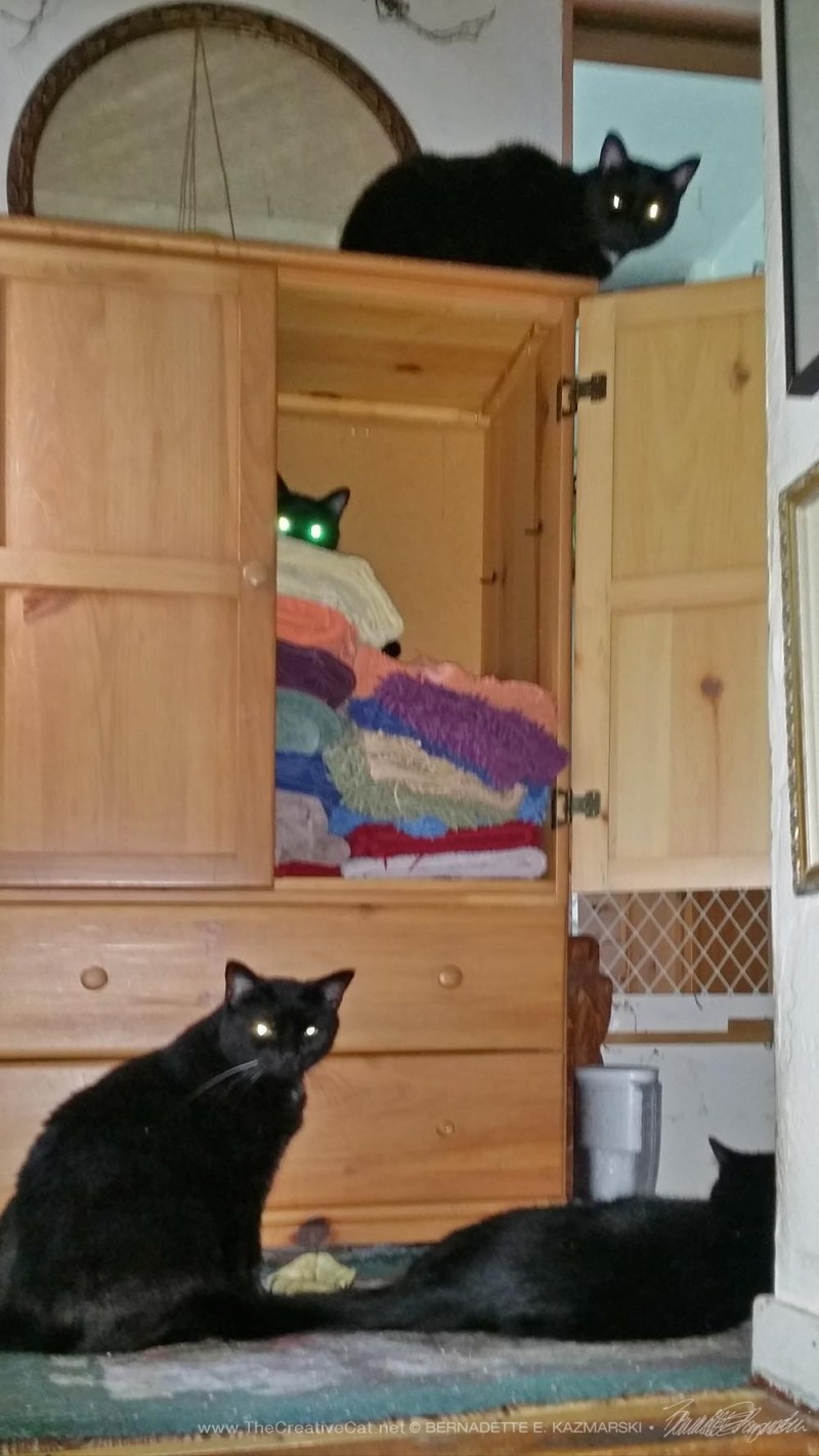 four black cats with wardrobe