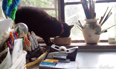 Mimi has a drink from the water bowl on the studio window.