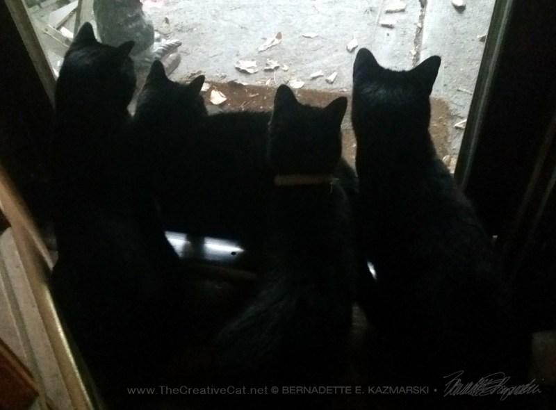 five black cats silhouette