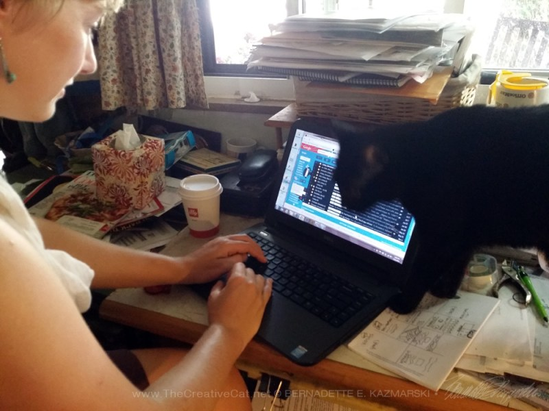 black cat and person using computer