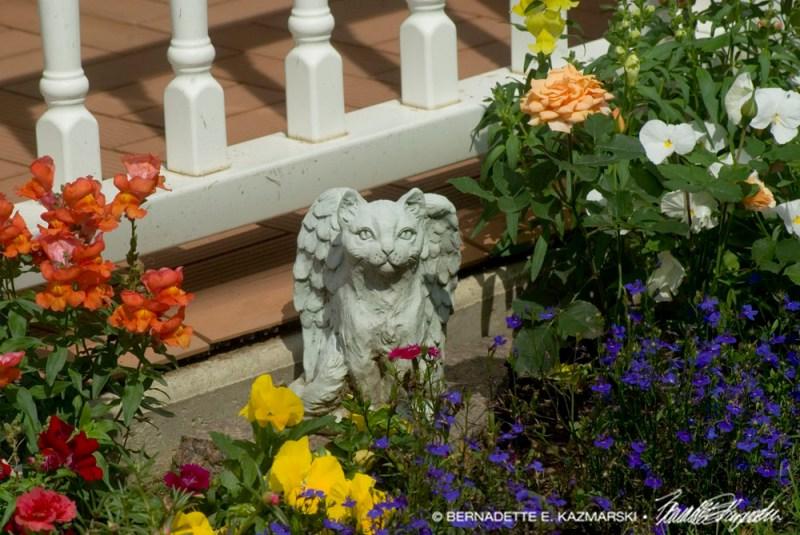 Angel Kitty in a neighbor's garden.