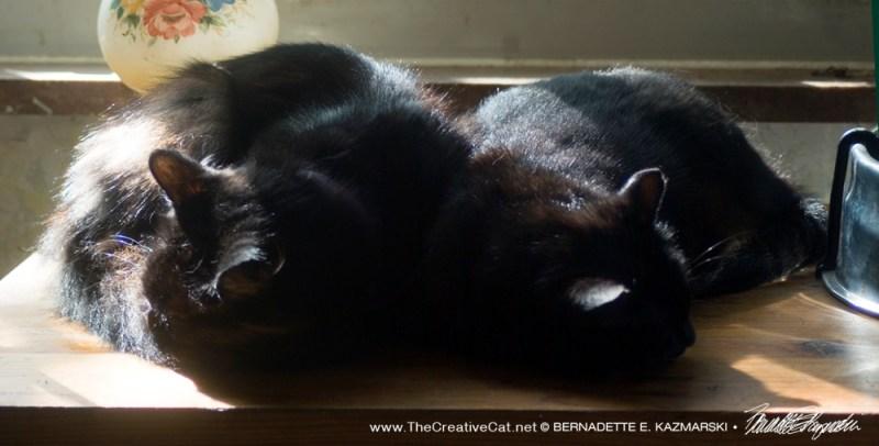 Basil and Bella napping together.
