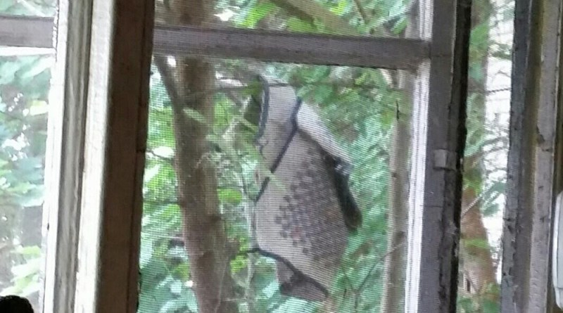 I saw it through the kitchen window.