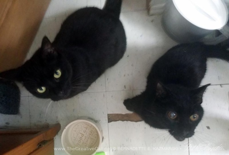 I turned around and saw two black cats.