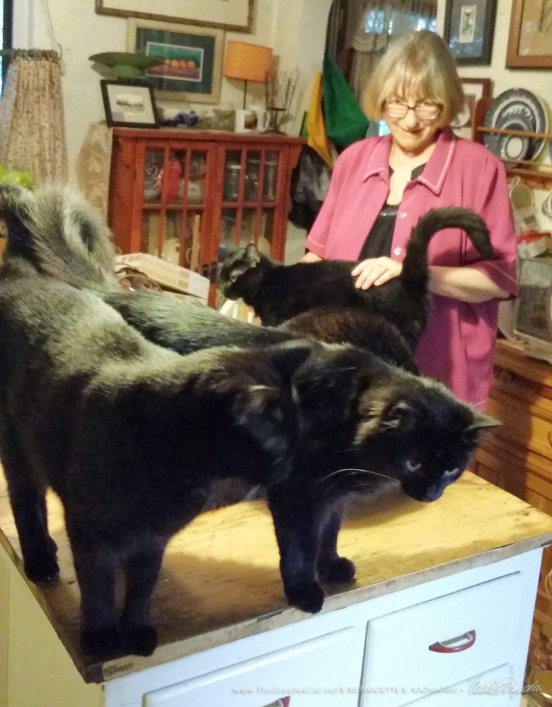 Maureen greets at least five of the black cats.