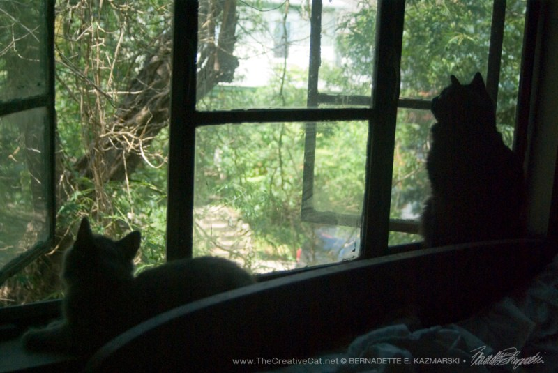 Basil watches the chickadees with Theodore.