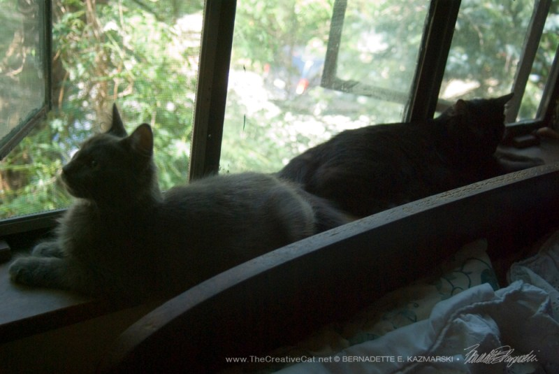 Theodore and Simon enjoy the windowsill.