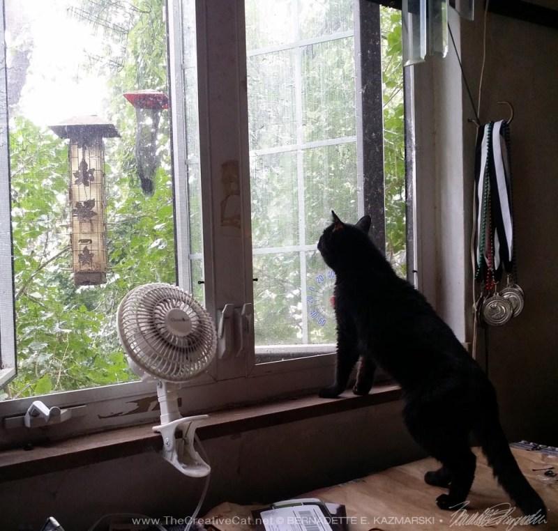 Watching the rain.
