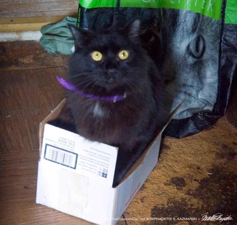 Basil-in-the-box