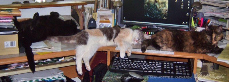 three cats melting off desk
