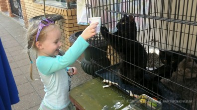 This little girl always wanted a black kitty, and Simon took to her right away!